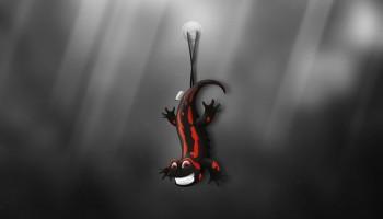 Salamander | Lucas Romero Di Benedetto