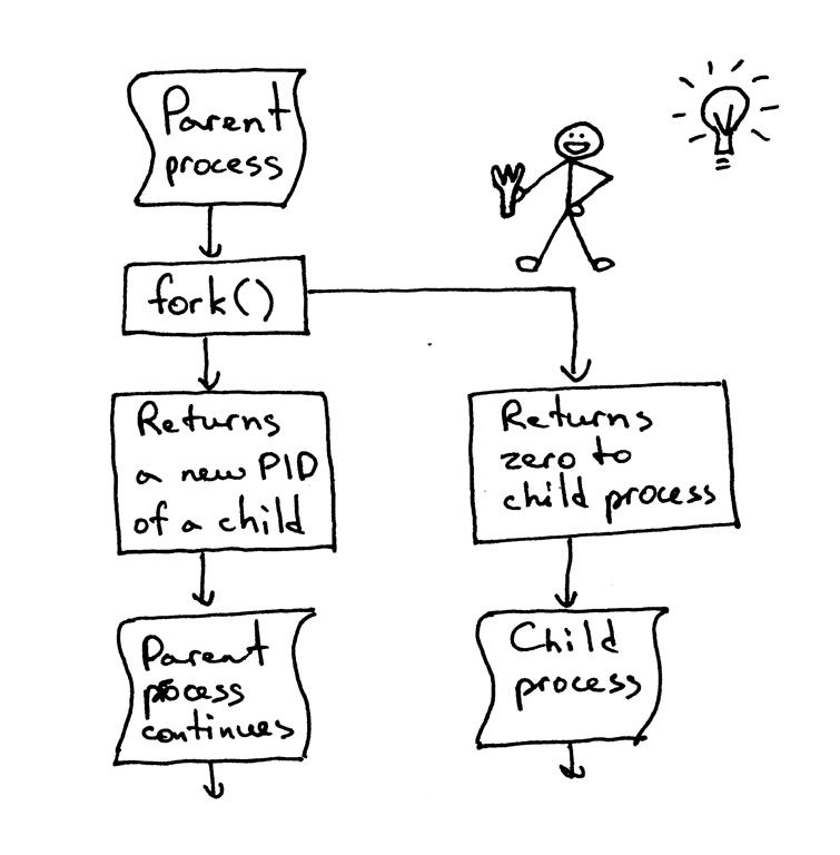 fork函数
