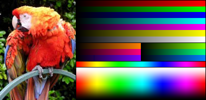 True colour image of a bird
