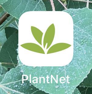 PlantNet smartphone icon